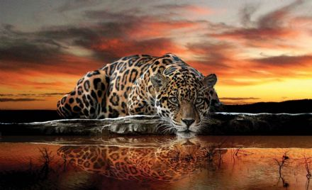 Giant non-woven wallpaper mural Leopard 126